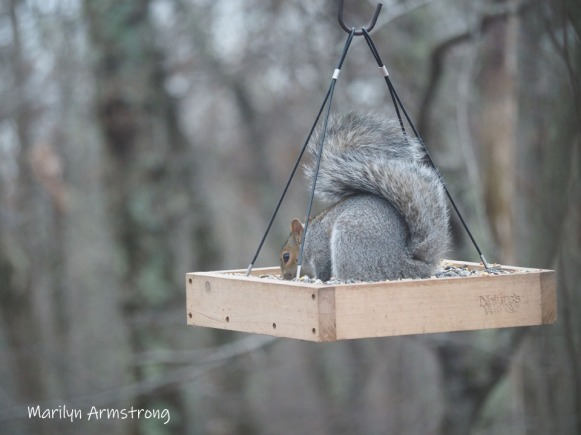 300-squirrel-11-18-20191118_310