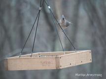 300-tufted-titmouse-birds-11-1120191111_105