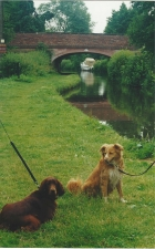 Dogs on the canal