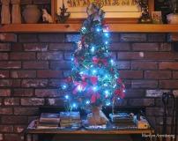300-christmas-tree-12-10-20191209_105
