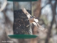 300-flying-titmouse-birds-12232019_118