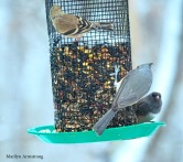 A Goldfinch, Titmouse, and Junco