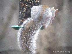 300-impression-well-fed-squirrel-12-1-20191201_003