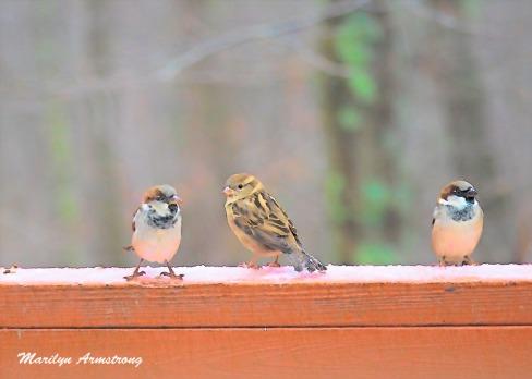 Little birds on the rail