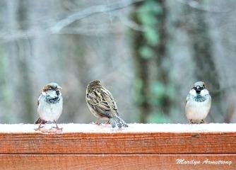 300a-three-little-birds-12-17-20191217_106