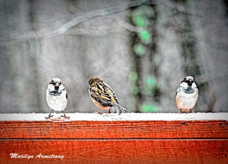 300a-three-little-birds-cartoon-12-17-20191217_103