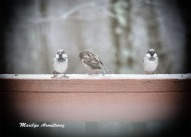 300a-three-little-birds-vignette-12-17-20191217_105