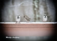 300a-three-little-birds-vignette-12-17-20191217_105