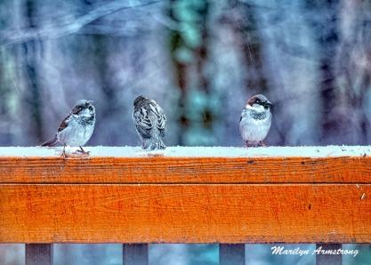 300a-snowy-three-little-birds-12-17-20191217_102
