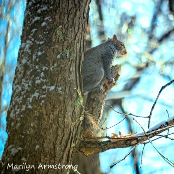 300-square-tree-squirrel-a-12-18-20191218_401.
