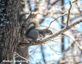 300d-tree-squirrel-a-12-18-20191218_404