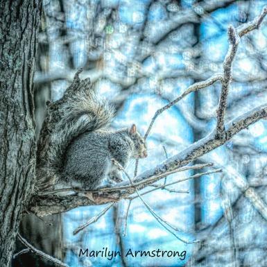 00d-tree-squirrel-a-12-18-20191218_407