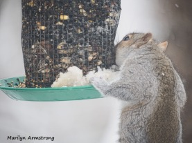 300x-snow-squirrel-12-2-20191202_005