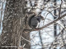 300x-tree-squirrel-a-12-18-20191218_410