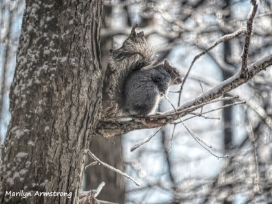 300x-tree-squirrel-a-12-18-20191218_410