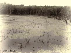 180-BW-More-Swamp-Trains-Owen-06072013_142