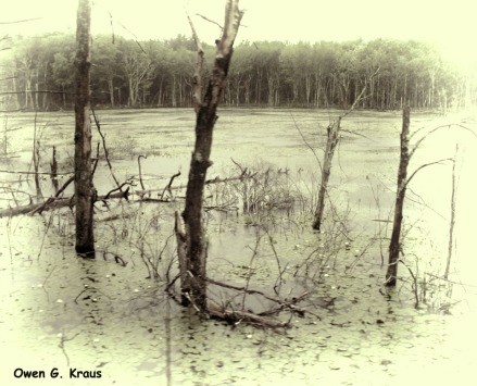 180-BW-Swamp-Trains-Owen-06072013_141