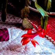 180-Square-Christmas_Cactus_01292020_203