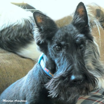 180-Square-Gibbs-Dogs etc-01222020_ 108