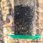 180-Square-Sunny-Titmouse-Birds_Pan_01222020_054