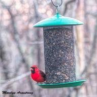 Cardinal on board