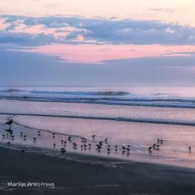 300-Square-Ogunquit-Seagulls-Plovers-06-14-2012_003
