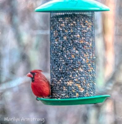 300-square-painted-sunday-cardinal-01052020_101.