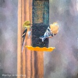 Two (of many) Goldfinches on their feeder