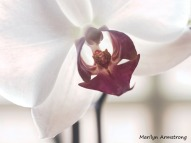 180-macro-perfect-orchid_02092020_303