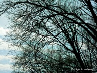 180-Tree-&-Sky-On-The-Road_02122020_208