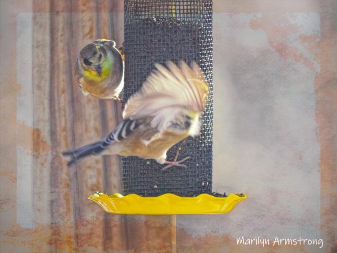 300-a-wng-and-a-prayer-birds-cold_birds_01202020_110