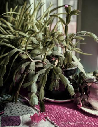 300-blooming-cactus-indoor-garden_01312020_008
