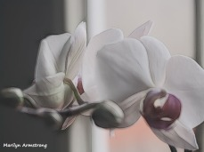 300-graphic-three-full-orchids_02252020_004