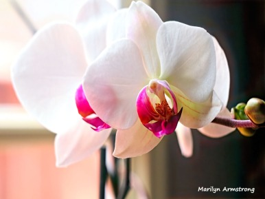 300-three-full-orchids_02252020_007