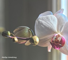 300-three-orchids_02232020_208