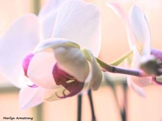 300-three-orchids_02232020_210