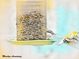300-wing-and-a-prayer-birds-flyers_1-9_01102020_004