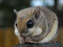 Big eyes for night vision