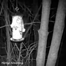 180-BW-Sqiare-Flying Squirrels-Ten_03172020_0126