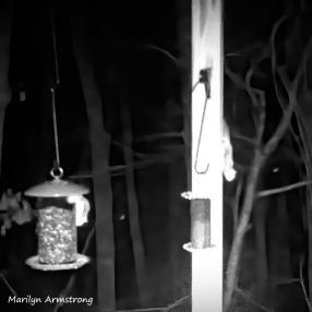 180-BW-Square-Flying-Squirrels-Night-6_03132020_106