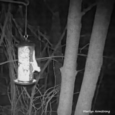 180-BW-Square-Flying Squirrels-Ten_03172020_0128