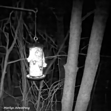 180-BW-Two-Flying Squirrels-Ten_03172020_0126