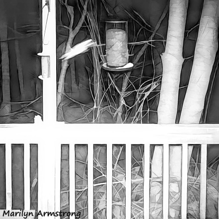 180-DIVE-DIVE!-Flying-Squirrels-Night-9_03152020_101