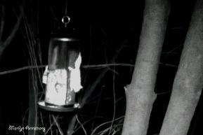 180-Flying-Squirrels-12_03212020_1006