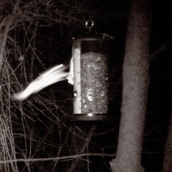180-Flying-Squirrels & Feeding Squirrel_03092020_113