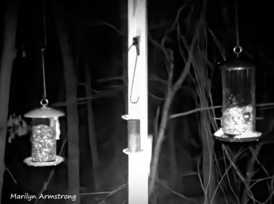 180-Flying-Squirrels-Night-6_03132020_105