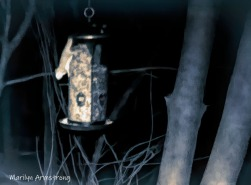 180-Quad-tone-Flying-Squirrels-0318_03182020_044