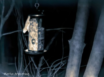 180-Quad-tone-Flying-Squirrels-0318_03182020_044