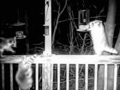 180-Raccoonls-12_03222020_1097