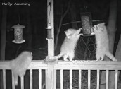 180-Raccoons-0330_03292020_525